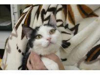 Adoptuj si kotě z Kočky Bohumín